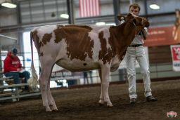 288HO00168 JACOT daughter winning Spring Yearling in Wisconsin